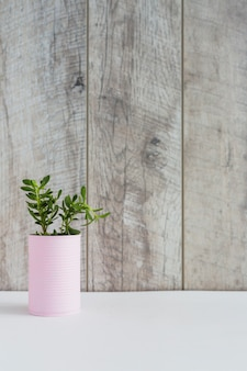Green fresh plants in the pink container on white desk against wooden plank