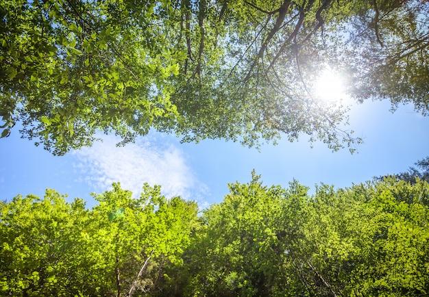 Green fresh tree leaves against the blue sky