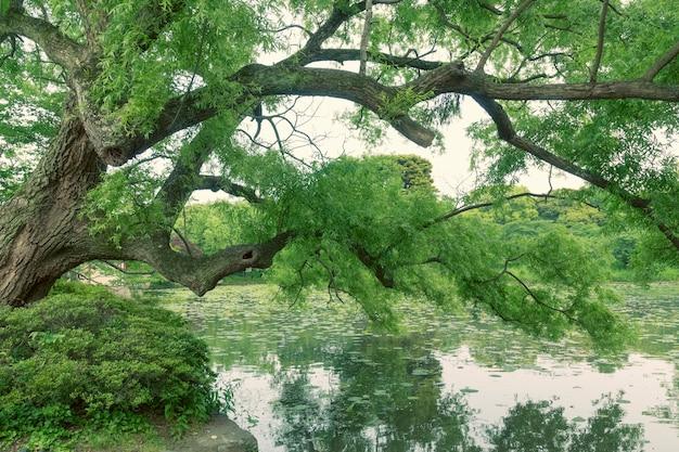 静かな湖の水の上で夏時間までに緑の新鮮な柳の木