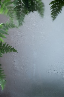 Зеленый freshfern оставляет за влажной стеклянной композицией. травяной фон. свежесть, капли воды, роса на стекле. натуральная листва, листва. ботанический фон