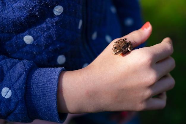 Green frog sitting on little girl hand.