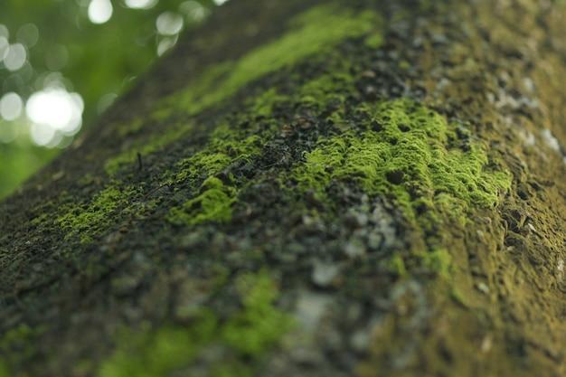나무에 녹색 곰팡이
