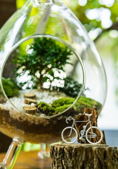 Green garden in bottle with small bicycle