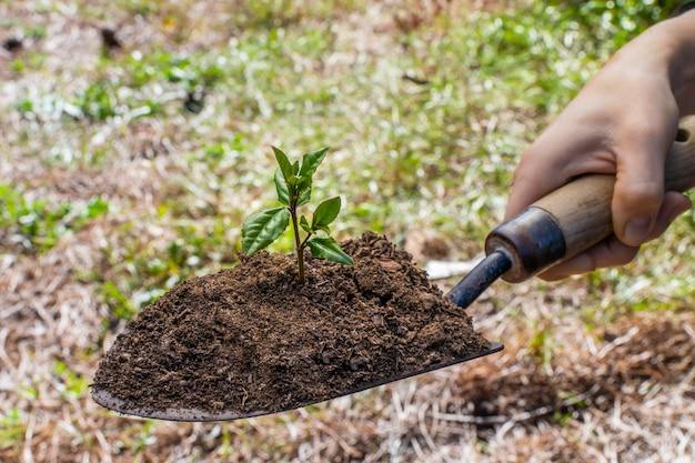 Зеленая садовая лопата на размытом фоне природы с молодым растением