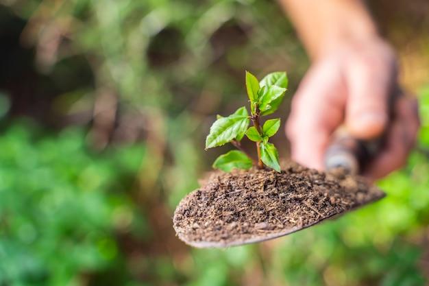 若い植物と自然の背景をぼかす緑の庭のシャベル