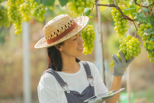 Green grape farm. female wearing overalls and farm dress straw hat