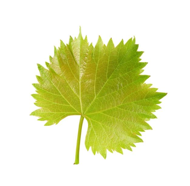 녹색 포도 잎 흰색 배경에 고립입니다. 클리핑 경로입니다.