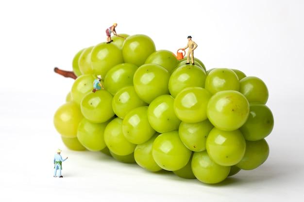 고립 된 흰색에 미니어처 농민과 녹색 포도