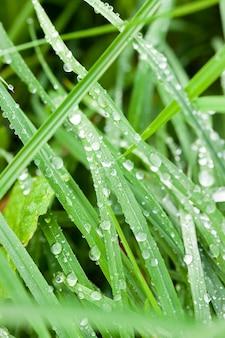 Зеленая трава после дождя, покрытая каплями воды
