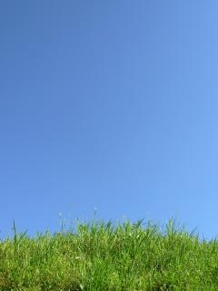 Green grass agains a clear sky