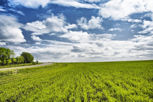 緑の草と青い曇り空