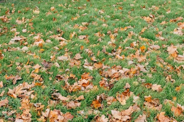 Зеленая трава и сухие листья осенью