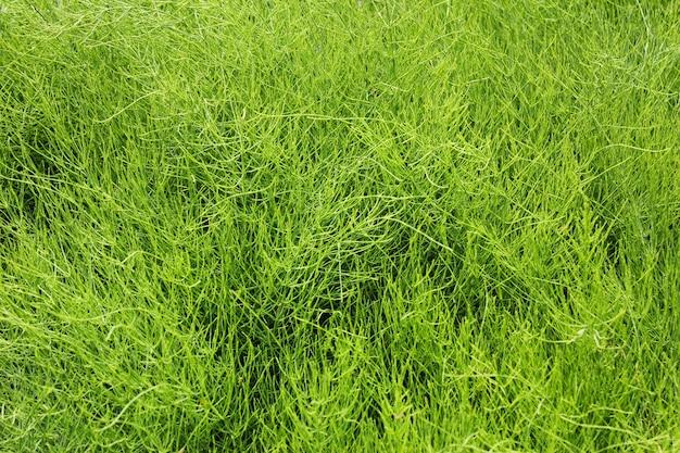 푸른 잔디와 필드, 녹색 색상, 풀 텍스처