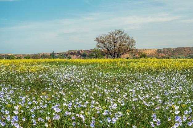 초원에 푸른 잔디와 꽃이 만발한 아마. 봄 또는 여름의 자연 장면에는 햇빛에 푸른 아마가 피어 있습니다.