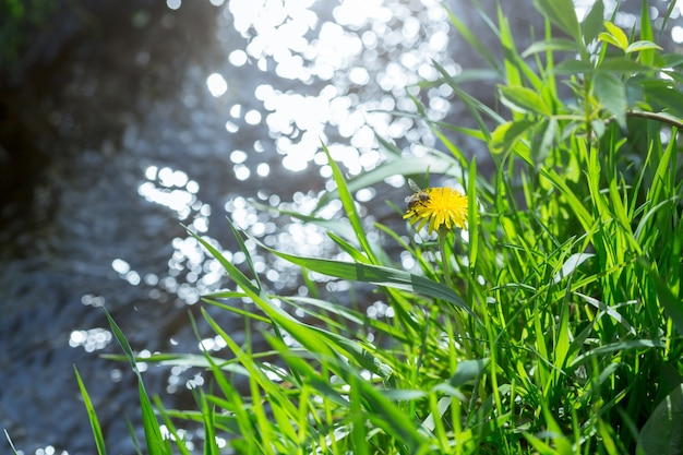 Зеленая трава и река