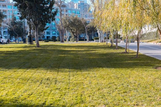 緑の芝生と公園の木