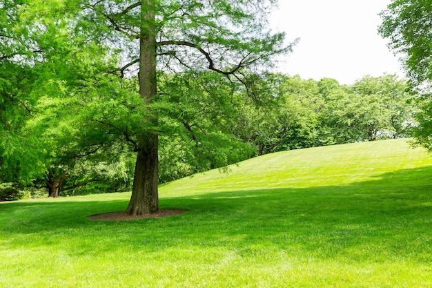 Зеленая трава и деревья на лугу.