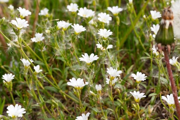 夏にクローズアップで撮影した緑の草と白い花