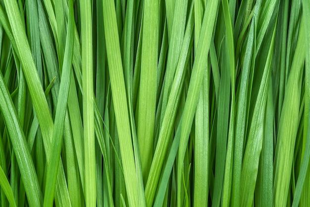 Зеленая трава как фон или текстура