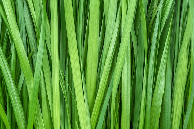 Green grass as background or texture