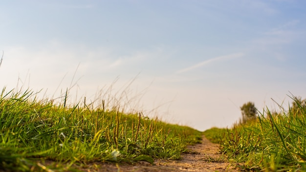 시골길 가장자리에 있는 푸른 잔디. 강한 흐린 배경. 공간을 복사합니다.