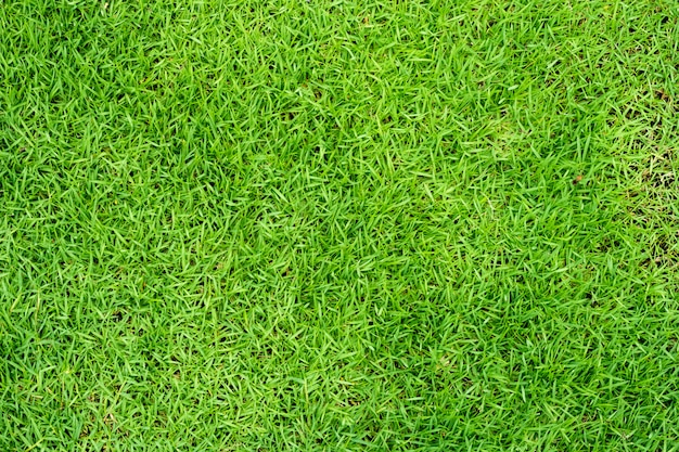 Green grass background or green natural wall texture use for design.