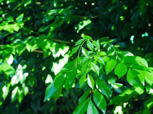 Green grass background, plant leaf background