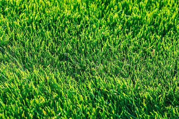 푸른 잔디 배경입니다. 텍스트 템플릿입니다.