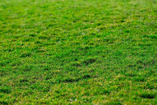 緑の草の背景テクスチャです。ゴルフまたはサッカー場