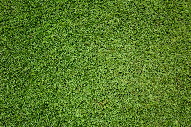 Green grass background and texture Premium Photo
