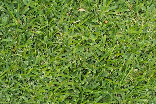 Green grass background for wallpaper