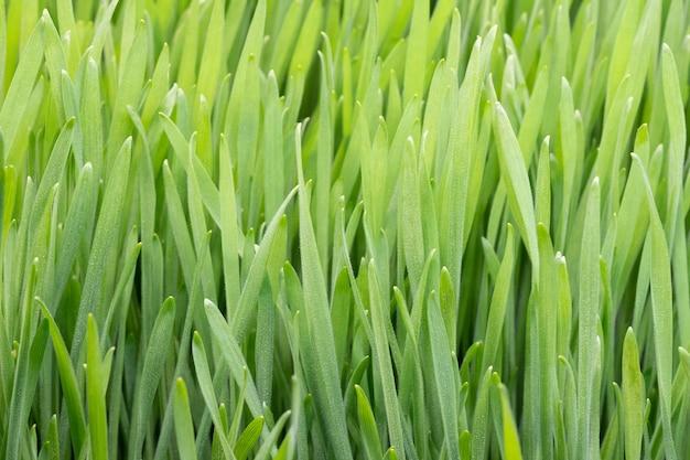 Зеленая трава фон