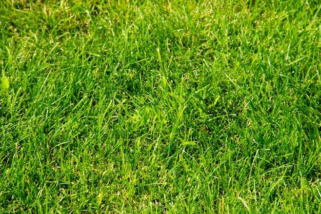 푸른 잔디 배경