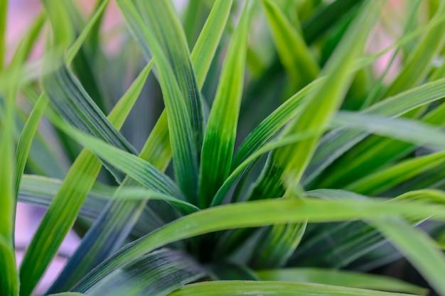 푸른 잔디 클로즈업입니다. 조직.