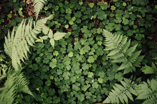 Зеленая трава. клевер и папоротник вид сверху
