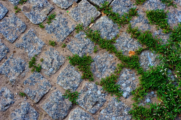 Green grass between cobblestone background traditional stone paving