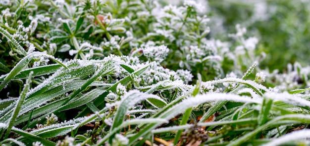 Зеленая трава, покрытая густым инеем, первые заморозки, приближение зимы