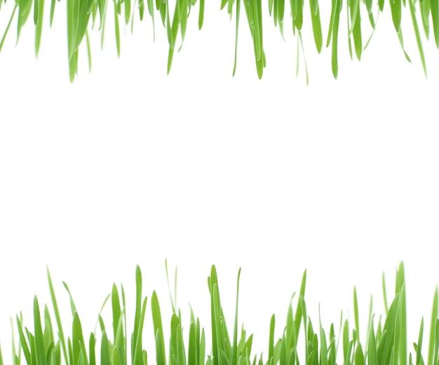 緑の草のデザイン白い背景のフレームは緑の草でデザインを作ります