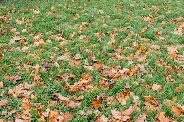 Green grass and dry leaves in autumn