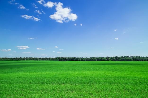 Поле зеленой травы и голубое небо. яркий солнечный летний день. идиллический пейзаж.