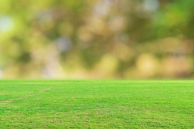 緑の芝生のフィールドとぼやけたボケ自然の背景。