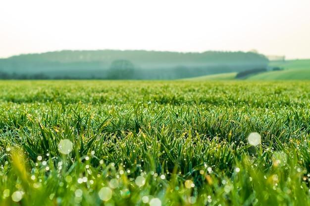 Зеленое поле травы и небо, зеленое поле и небо, зеленое поле пшеницы