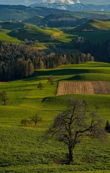 昼間の緑の芝生と木々