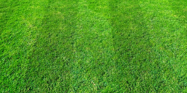 Green grass field background for soccer and football sports. green lawn texture background.