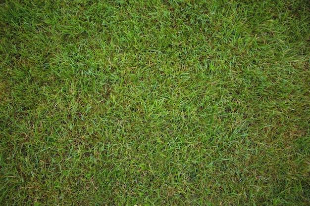 Зеленая трава фон поле