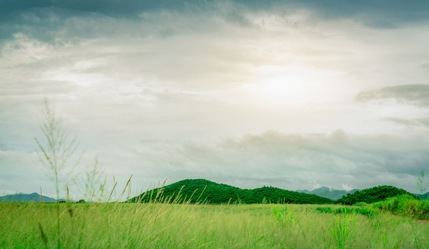 Green grass field in front of the mountain at countryside. nature landscape. green grass meadow in farm. sky after rain with white and gray clouds.