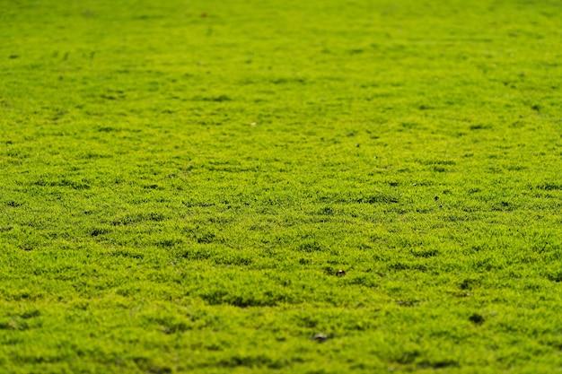 녹색 잔디 필드, 녹색 잔디 배경 질감