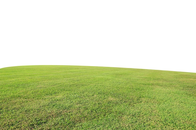Green grass field isolate on a white background