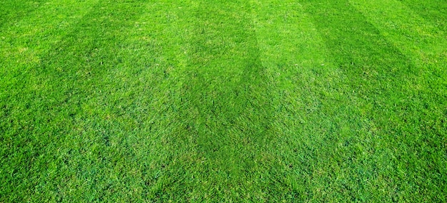 Green grass field pattern background for soccer and football sports. green lawn texture background.