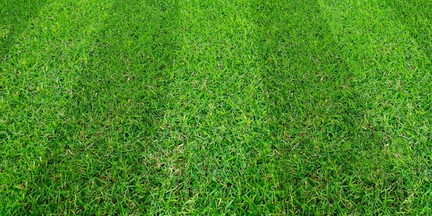 Green grass field pattern background for soccer and football sports.